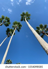 Upward view of palm trees