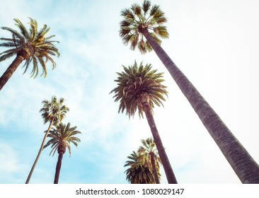upward view of palm trees against blue sky