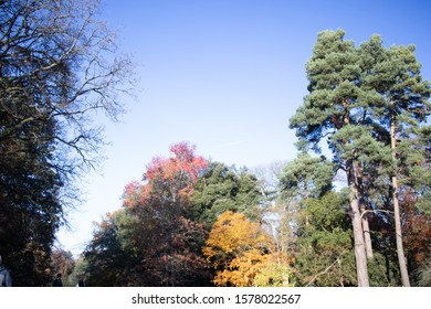 An upward view of trees in autumn / fall