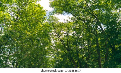 Upward wide angle shot of dense forest vegetation and trees mid day, with light scattering through the leaves