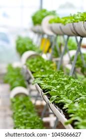 Urban agriculture, urban farming, or urban gardening