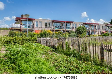 Urban agriculture: a vegetable garden beside an apartment building in a suburb of a city