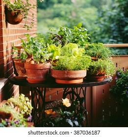 Urban Balcony garden