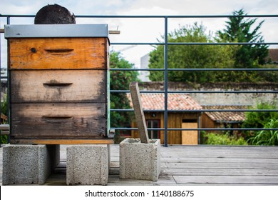 Urban bee hive in bordeaux, France.
