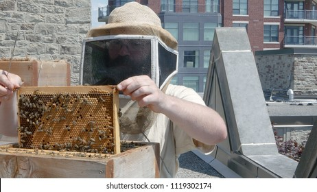 Urban beekeeper raising brood comb out of a hive barehanded on a rooftop in a city environment