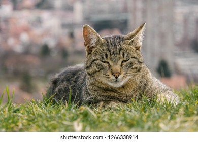 urban cat in the grass, city in the background