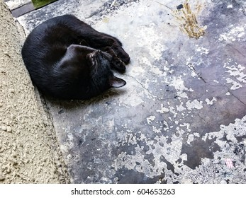 Urban and city environment concept. Stray cat sleeping on the street. Stray cat and street cat concept.