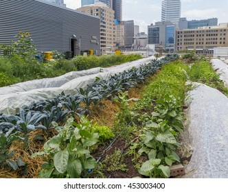 Urban Farm - Growing vegetables on roof of urban building