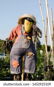 Urban garden scarecrow in color