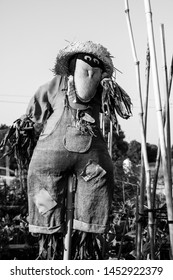 Urban garden scarecrow shot in black and white
