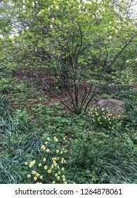 Urban garden in spring