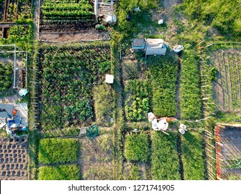 Urban gardening. City urbanized vegetable garden. Aerial view. Growing, farming vegetables in the city. Agriculture of organic hand grown  food. Self sustained system of gardening reusing rainwater.