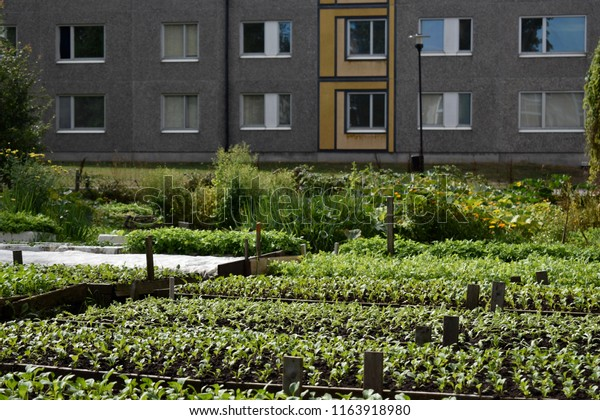 Urban Gardening Community Vegetable Garden Apartment Stock ...