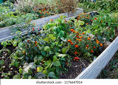 urban gardening with raised beds