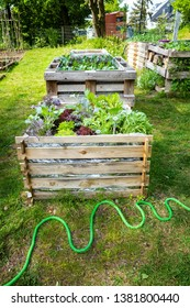 Urban Gardening with raised beds with salad and other vegetables as well as insect hotel