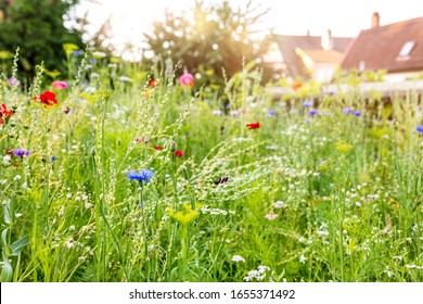 Urban gardening with a wildflower meadow in the own garden, insect and wildlife animal protection