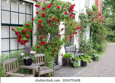 Urban green with roses and chairs in Leiden Holland