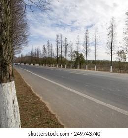 Urban highway woods