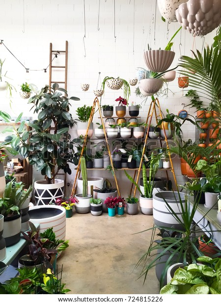 Urban jungle. Light coloured interior filled with indoor plants.