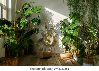 Urban jungle, love for plants concept. Interior of cozy home garden with fresh green monstera houseplant, wicker chair, wooden floor. Sunlight and shadows. - Shutterstock ID 1942121851