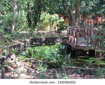Urban park with trees and wooden walkway over lake, in sunny day