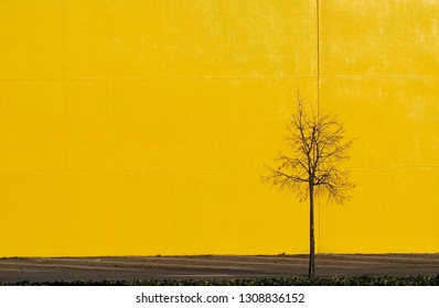 Urban street background for copy space. Bright yellow concrete wall with a street and a  small bare tree .