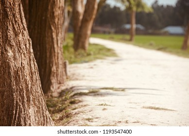 An urban village road with trees isolated unique photo