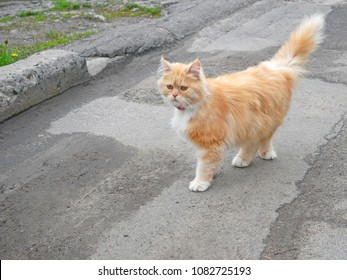 Urban yellow young kitten rambling on the street