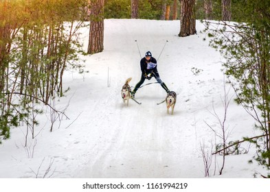 Urban-type settlement Reshetiha, Nizhny Novgorod Oblast / Russia - 02.27.2016: Sled dog race. Team consists of man musher and two Siberian Husky breed dog. Skijoring kind of sport.
