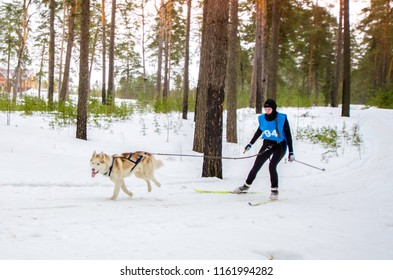 Urban-type settlement Reshetiha, Nizhny Novgorod Oblast / Russia - 02.27.2016: Sled dog race. Team consists of man musher and one Siberian Husky breed dog. Skijoring kind of sport.
