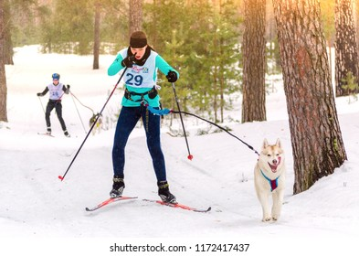 Urban-type settlement Reshetiha, Nizhny Novgorod Oblast / Russia - 02.27.2016: Sled dog race. Team consists of woman musher and one Siberian Husky breed dog. Skijoring kind of sport.