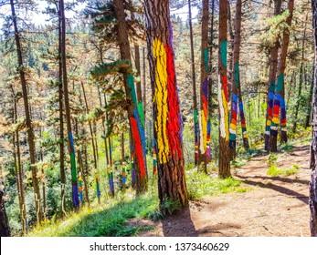 Urdaibai Biosphere Reserve, Bizkaia,Spain; 2018-04-16: Trunks of painted pine in El bosque de Oma,