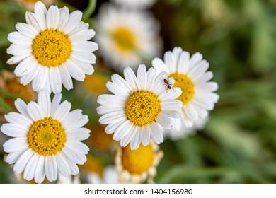 urginea maritima flover, flower. flowers, nature, natural, color,