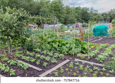 URK, THE NETHERLANDS - JUNE 06, 2016: Allotment garden in early spring with potatoes and cauliflower