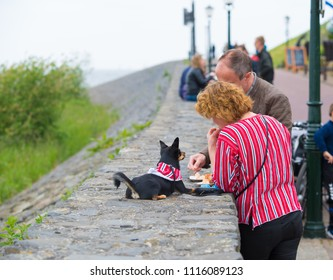 URK, NETHERLANDS - MAY 19, 2018: Unknown couple eating fish while their dog is waiting for its share
