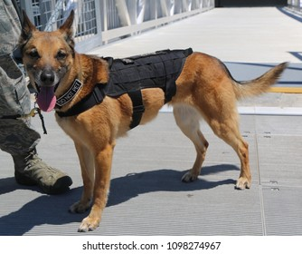 US Air Force K-9 dog provides security during Fleet Week 2018