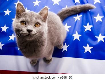 U.S. Animal