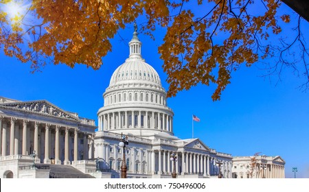 US Capital Building and Autumn tree.