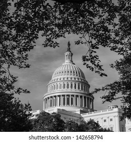 US Capitol Building framed by tree branches - Washington DC United States - Black and white toned