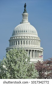 US Capitol in spring blossoms - Washington DC United States