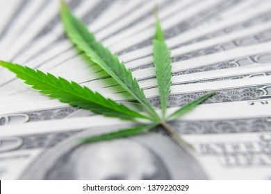 US dollar bills over the green cannabis leaves. Money and marijuana. Concept of business, medicine and selling hemp, drugs. Increase revenue and profits in the field of growing medical cannabis