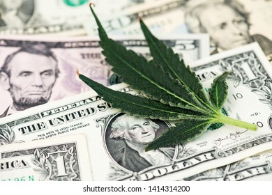 US Dollar and Cannabis Medical Marijuana Leaf. Cannabis Medical Marijuana Business concept. Dollar Marijuana Cannabis Hemp CBD THC