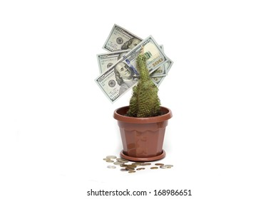 U.S. dollar on the living flower and small iron coins. Photo.
