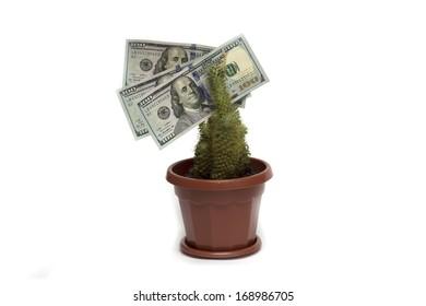 U.S. dollar on the living flower. Photo.