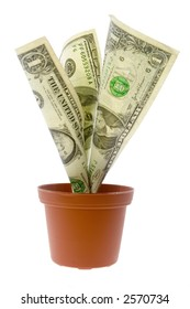US money growing in a pot isolated on white background