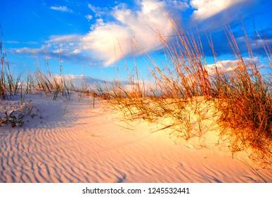 USA, Alabama, Gulf Shores, sand dune, sea oats