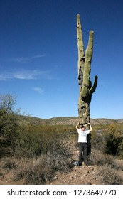 USA, Arizona - November 27, 2009:  Organ pipe national park, Arizona - large cactus Carnegiea gigantea in desert