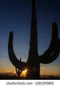USA, Arizona, Saguaro National Park, Sonoran Desert and Saguaro Catus of the Saguaro National Park