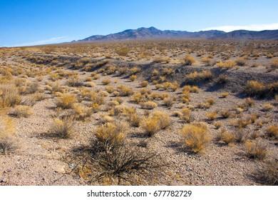 USA, California, Death Valley National Park, Desert vegetation