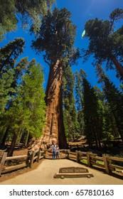 USA. CALIFORNIA. JUNE, 2017: Sequoia National Park. General Sherman tree.